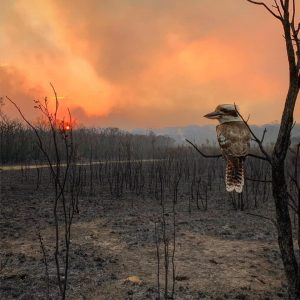 Recent Bush Fires - Maggie Dent's Advice for Parents