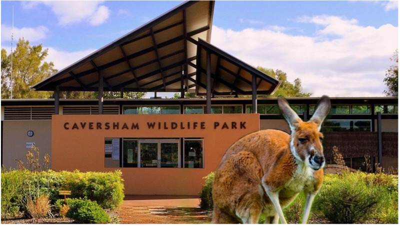 Pre Primary, Year 1 and Year 6 Excursion to Caversham Wildlife Park